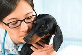 Kvinna veterinären med tax hund — Stockfoto
