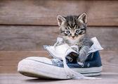 Kitten is sitting in a shoe — Stock Photo
