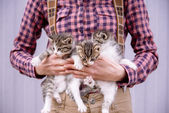 Woman is holding kittens — Stock Photo