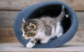 Kitten in the hat — Stock Photo
