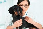 Smiling veterinarian with dachshund — Stockfoto