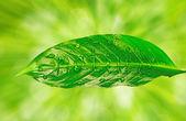 Natura jest napisane na zielony liść — Zdjęcie stockowe