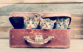 Kittens are sitting in suitcase — Stock Photo