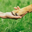 Dog paw and human hand are doing handshake — Stock Photo #47859949