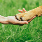 łapa psa i ludzką ręką robią uścisk dłoni — Zdjęcie stockowe #47859949