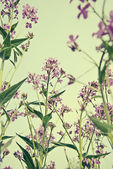 Willow-herb flowers — Stock Photo