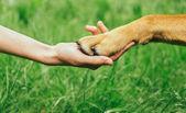 狗爪子和人的手正在握手 — 图库照片