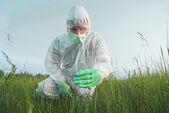 Scientist agronomist examines green plant — Stock Photo