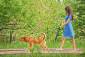 Beautiful girl is walking with dog — Stock Photo