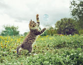 Kitten playing with soap bubble — Stock Photo