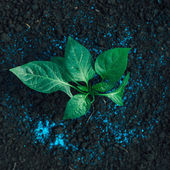 Green plant and fertilizer — Stock Photo