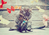 Kitten is playing with paper cranes — Photo