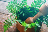 Fern leaves in mortar — Stock Photo
