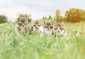 Four kittens on  meadow — Stock Photo