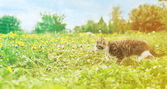 Little kitten runs on grass — Stock Photo