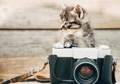 Curiosity kitten with old camera — Stock Photo