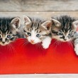 Kittens in red box — Stock Photo #50468665