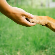 Dog and human handshake — Stock Photo #50468605