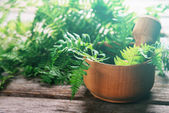 Green fern leaves in mortar — Stockfoto