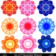 Set of 9 beautiful colored flowers. — Stock Vector