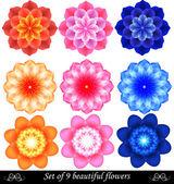 Set van 9 mooie gekleurde bloemen. — Stockvector