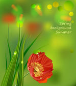 Red poppies on green summer background — Vector de stock
