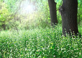 Forest glade sunlit — Stock Photo