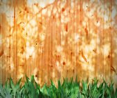 Leaves irises on a backdrop sunlit fence — Stock Photo