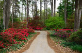 Azalea Walk — Stock Photo