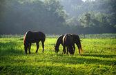 üç at — Stok fotoğraf