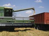 урожай пшеницы — Стоковое фото