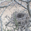 Nest — Stock fotografie #39207465