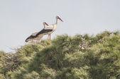 Stork series 01 — Stock Photo