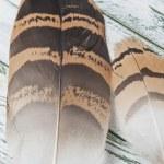 Bustard feathers series 05 — Stock Photo #46884781