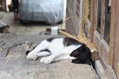 Sleeping Black and White Cat — Stock Photo