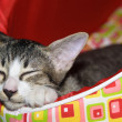 Sleepy Tabby on Red Cat Bed — Stock Photo