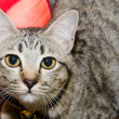 A tabby cat staring — Stock Photo #35814673