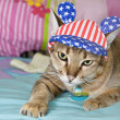 Tabby Cat in American Flag Hat — Stock Photo