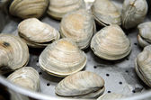 Clams cooked in steamer — Stock Photo