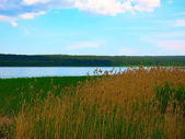 Summer lake, forest and some grass on the shore — Stock Photo