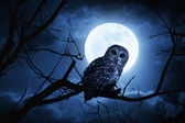 Owl Watches Intently Illuminated By Full Moon On Halloween Night — Стоковое фото