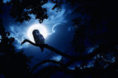 Owl Watches Intently Illuminated By Full Moon On Halloween Night — Foto Stock