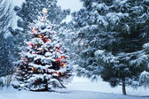 Brightly Lit Snow Covered Christmas Tree In Snowstorm — Stock Photo