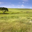 Serene nature landscape of the midwest Kansas Tallgrass Prairie Preserve — Stock Photo