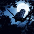Owl Watches Intently Illuminated By Full Moon On Halloween Night — Stock Photo #31183335