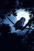 Owl Watches Intently Illuminated By Full Moon On Halloween Night — Zdjęcie stockowe