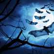 Creepy Bats Fly In By Full Moon For Halloween Night  — Stock Photo