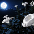 Moonflower bush  — Stok fotoğraf