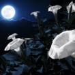 Moonflower bush — Stock Photo