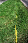 Grass highway - painted with yellow lines — Stock Photo
